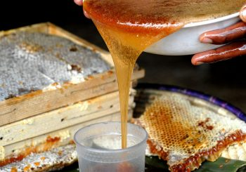 Wenchi Volcano Honey, a Project of Preservation