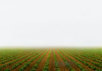 Slow Food Europe supports the Appeal to the Commission over Misalignment of the CAP Reform and the Green Deal