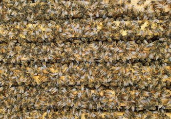 "Beekeeping: A Terra Madre ""How it's Made"" Preview"