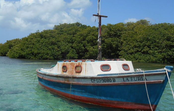 Protecting Mangroves Protects Life, Culture, and Food Sovereignty