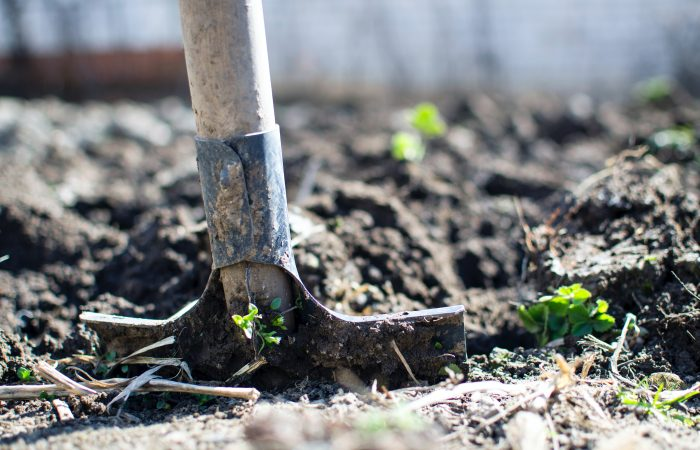 Old Roots, New Shoots? Making Europe's Food Production System More Environmentally and Socially Sustainable