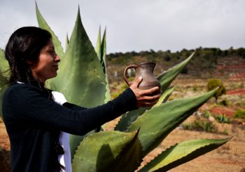 A Participatory Guarantee System  for Indigenous-led Slow Food Presidia