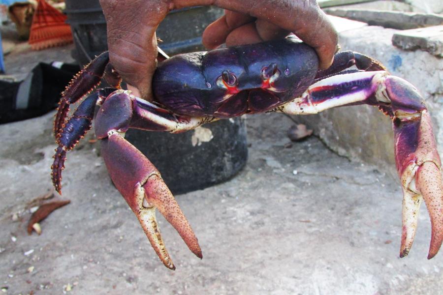 Black Crab Colombia